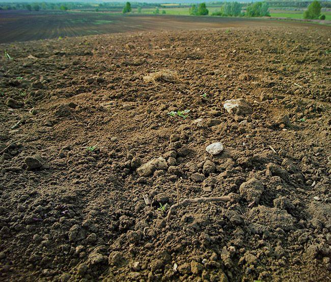 farm dirt